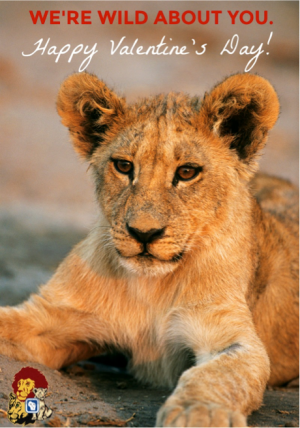 lions-pride-valentines-day
