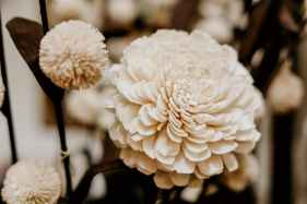 sepia photography of flowers