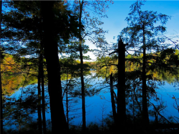 Lions Lake in Fall
